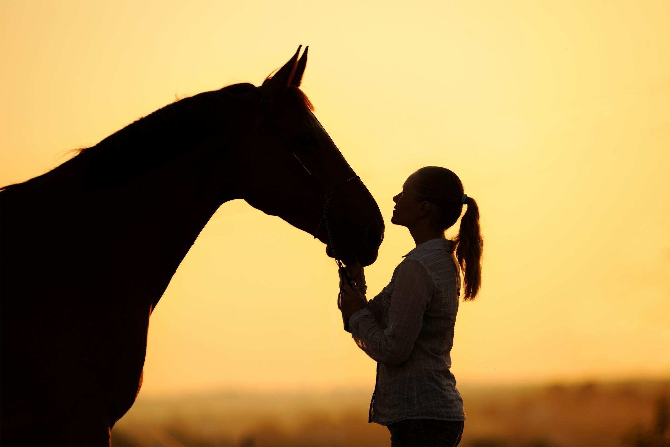 equine services  El Campo, TX
