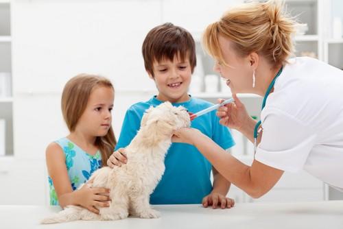 Vaccinations  El Campo, TX